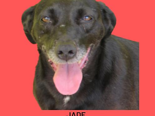 Jade-parelheiros