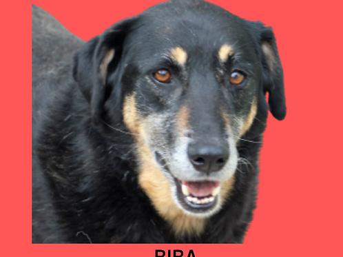 Biba-300 Anjos
