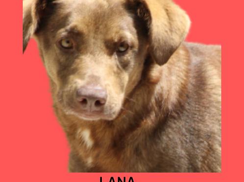 Lana-caucaia