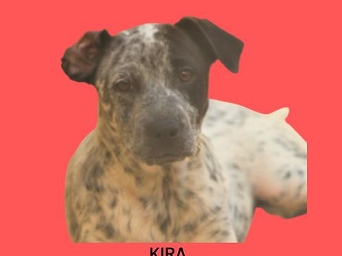 Kira-bibi