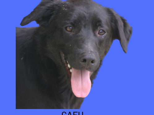 Cafu-300 Anjos