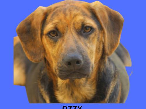 Ozzy-bombom