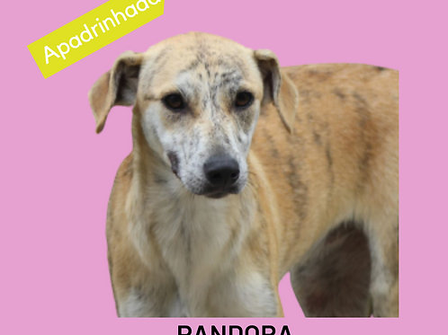 Pandora-menina