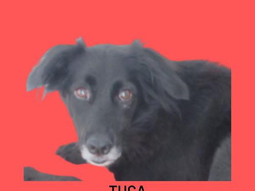 Tuca-claudio