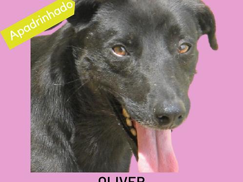 Oliver-AP