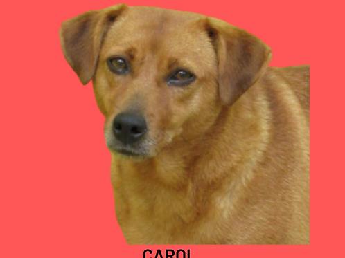 Carol-madá
