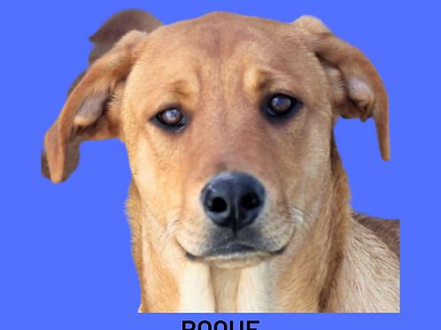 Roque-caucaia