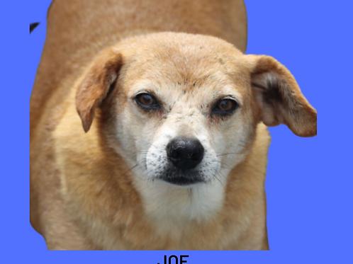 Joe-ponte