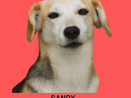 Sandy-fabiano