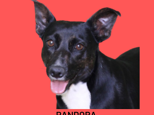 Pandora-Dna Beth