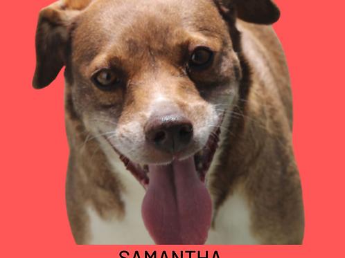 Samantha-raposo