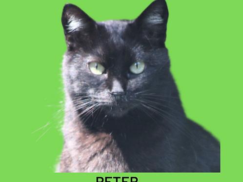 Peter-gato