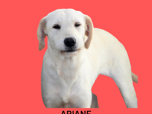 Ariane-ipojuca