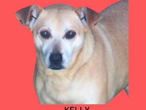 Kelly-aurora
