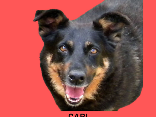Gabi-claudio