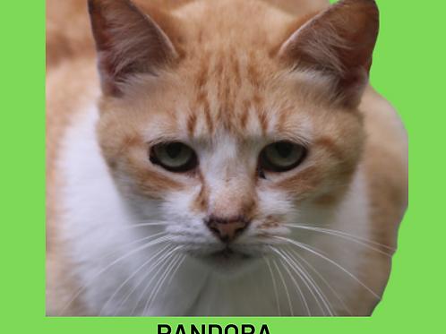 Pandora-gata