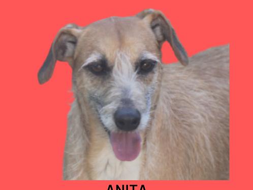 Anita-Sr. Claudio