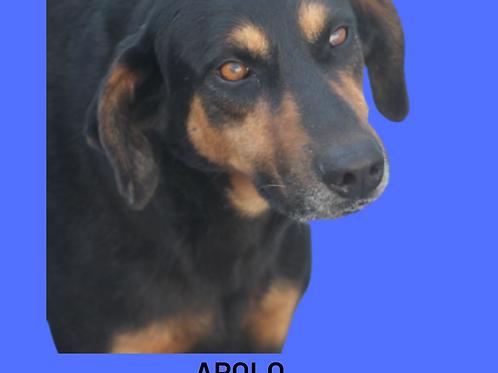 Apolo-euridice