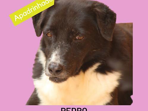 Pedro-parelheiros