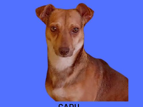 Cadu-embu