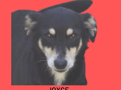 Joyce-Sr. Claudio