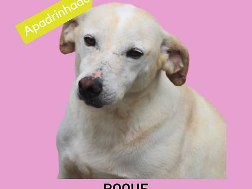 Roque-300 Anjos