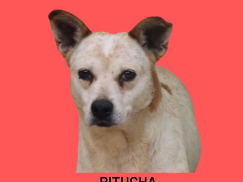 Pitucha-Sandra