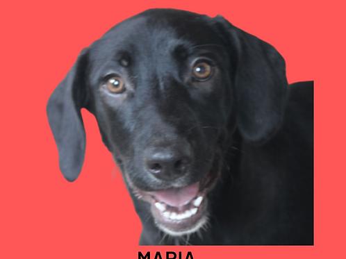Maria-300 Anjos