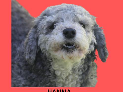 Hanna-Sr. Claudio