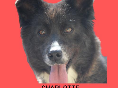 Charlotte-Sr. Claudio