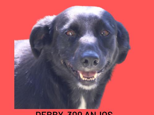 Debby-300 Anjos