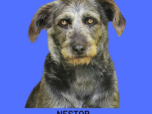 Nestor-caucaia