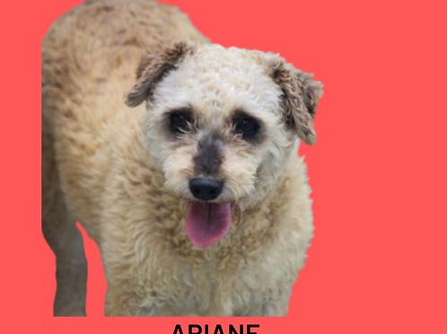 Ariane-Sr. Claudio