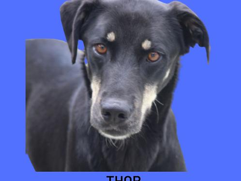 Thor-madona