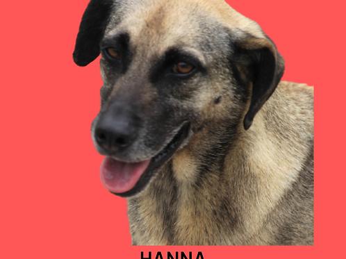 Hanna-300 Anjos