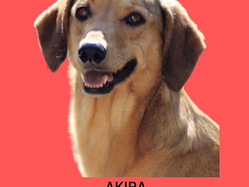 Akira-Sr. Claudio