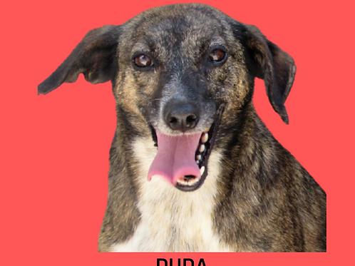 Duda-AP