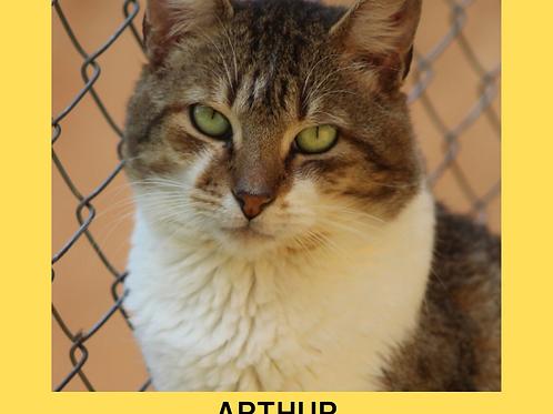 Arthur-gato