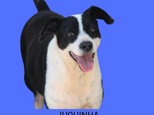 Juquinha-zoonose