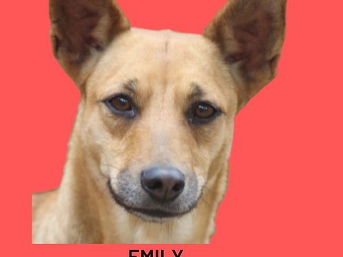 Emily-caucaia
