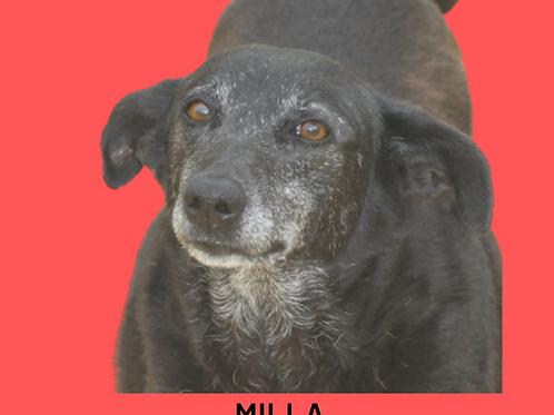 Milla-Sr. Claudio