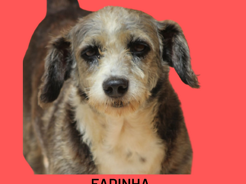 Fadinha-300 Anjos