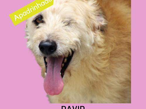 David-dv