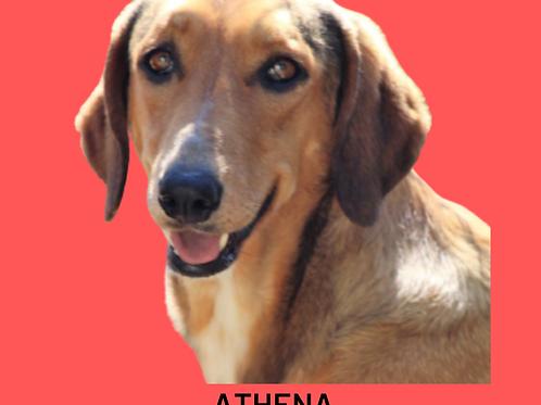 Athena-Sr. Claudio