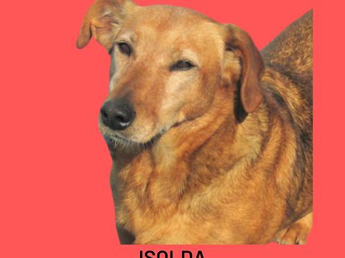 Isolda-300 Anjos