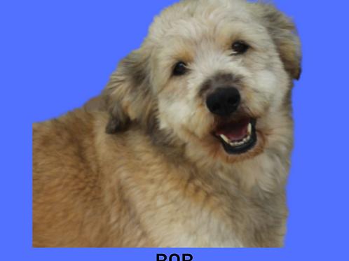 Bob-bruno
