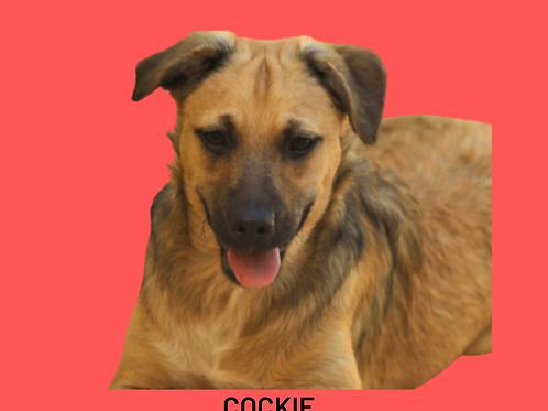 Cockie-bibi