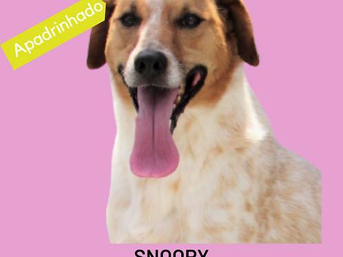 Snoopy-caucaia