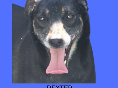 Dexter-valentina