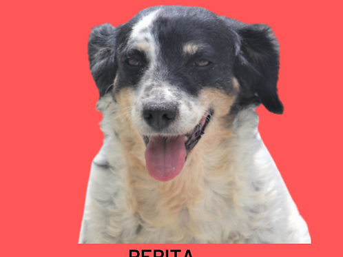 Pepita-300 Anjos